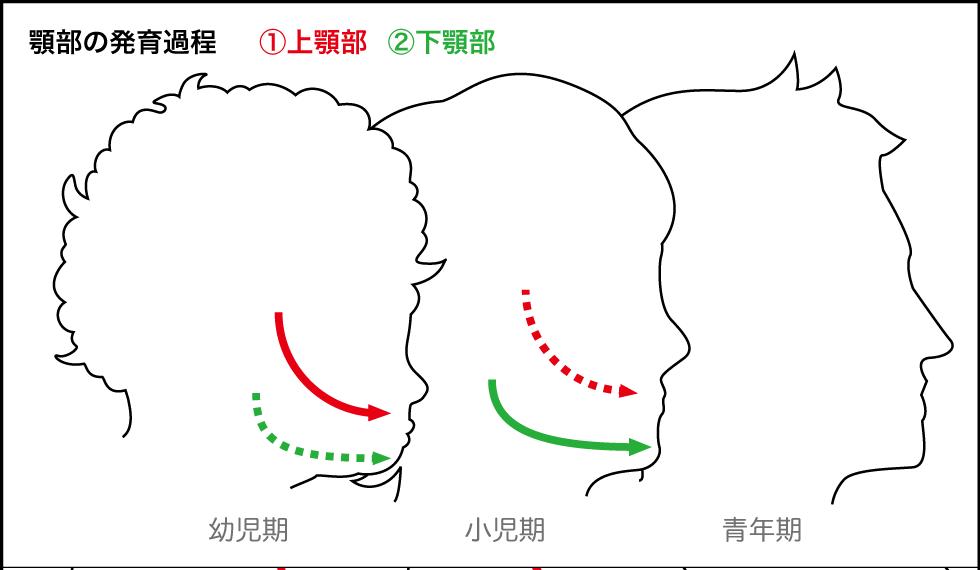 顎部発育過程図